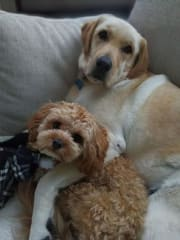 Two Furry Friends Can't Wait for a New Playmate