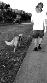 Experienced Dog Walker in Stanmore area