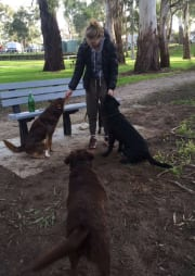Experienced and Enthusiastic Pet Minder in Berwick