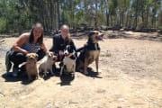 Pet Care in Belair region