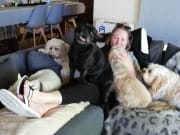 LOVING home based dog care, pooches home away from home