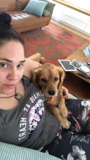 Qualified vet nurse and animal obsessed