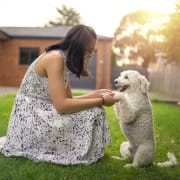 Lovely Pet Family + one FREE portrait* of your pet (digital photo) by 8pril Studio