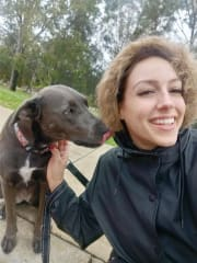 Experienced Professional Dog Walker | GPS, Time-Tracked, Camera Footage