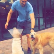 Active, motivated pet lover in Randwick