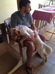 Loving pet couple who miss our animals in our home countries
