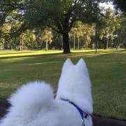Dog lover and walker: South Melbourne, Albert Park, Royal Botanic Gardens, St Kilda