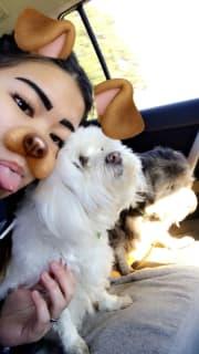 Bunbury Dog Lover