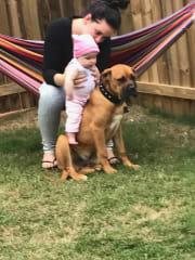 Pet Loving Family in Beerwah