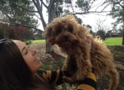 Just a girl who loves dogs located in Bentleigh East