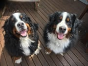 Pet Loving Family in West Pennant Hills