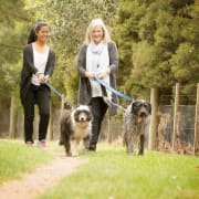 Best Buddy Pet Care - Launceston