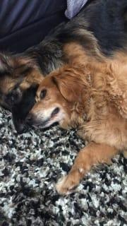 Most loving Walker in Brisbane, every animal is my best friend!