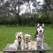 Fun loving, reliable pet sitter