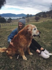 Dog loving pet sitter and carer in Wollongong ??