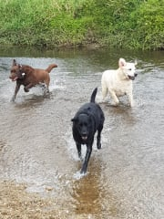 Experienced dog sitters with two of our own Labradors