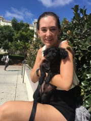 Marsfield Sitter: Puppy Loving College Student with flexible hours and loves to go on walks and be active, AND WOULD LOVE A COMPANION!