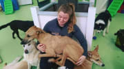 Passionate Animal Lover with a Heart Full of Music in Elwood!