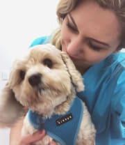 Reliable vet student? Dog walks & drop-in petsitting (inner west).