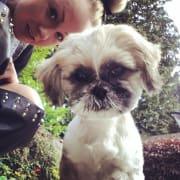 **Fun & Loving Dog Walker - Glen Huntly Area**
