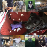 Experienced pet sitter, animal lover, caring, patient and reliable