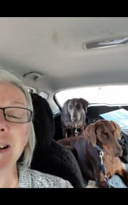 A reliable caring pet sitter