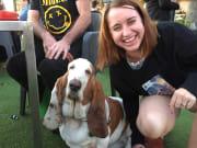 Dog obsessed, reliable, Irish pet-sitter/walker in St Kilda