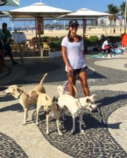 Loving & Active Dog Walker/Sitter in Rose Bay