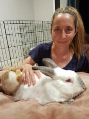 Rabbit Sitter Available in Waterloo