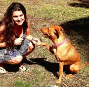 Experienced and reliable pet sitter and dog walker.