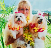 Small dog specialists with over 20 years experience