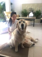 Responsible and Fun Loving Pet Sitter