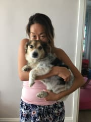 Reliable and caring pet sitter/walker