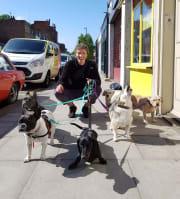 Nik Meets Dog Melbourne Dog Lover