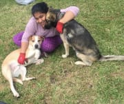 Affectionate and Experienced dog sitter with fostering experience