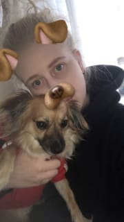 Reliable, love animals, friendly, caring pet sitter