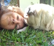 Experienced and reliable animal carer with fantastic references