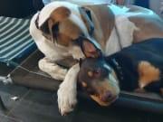 Pet nanny, dog masseur & all round cuddler