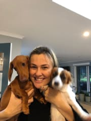 Puppy Palace, Lane Cove West