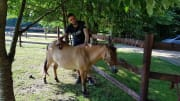 Love pets and wild beasts from all over the world