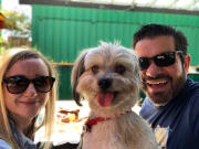 Reliable and Loving Dog Care - Balwyn/Surrey Hills area