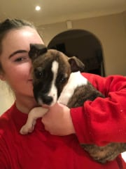 Reliable, caring pet sitter, trustworthy & animal lover