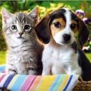 Alison's Pet Minding Service