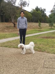 A pet lover with Teddy, 7yo Maltese x Shihtzu