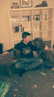 Caring, trustworthy and affectionate pet sitter
