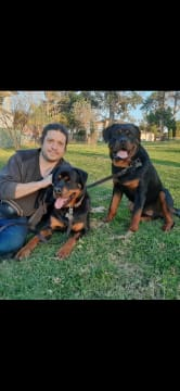 Petsitting at your Home covering all NSW