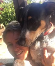 Active, reliable, fun loving pet and house sitter