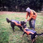 Reliable Animal Lover, Dogs Cats Birds and more
