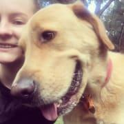 Reliable, fun & happy dog lover