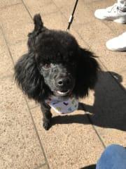 Sydney CBD dog walker; experienced dog, rabbit, cat sitter
